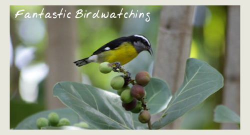 bird watching - eco holidays in tobago
