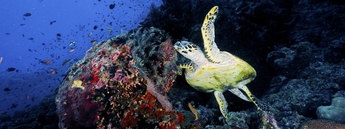Maldives House Reef
