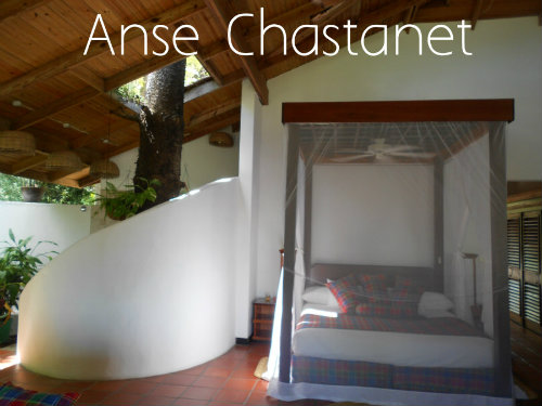 Anse Chastanet Ginger