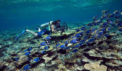 house reef conservation in the Maldives
