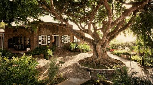 Montpelier - Tree Restaurant - TB 500