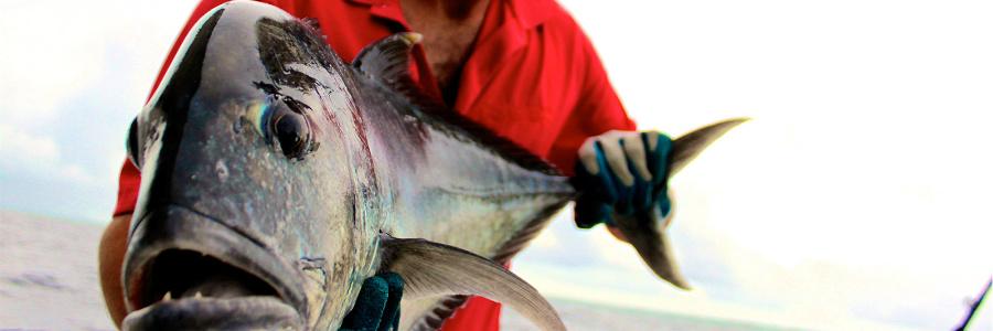 kuredu-fishing-3-900-300