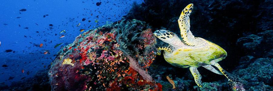 oblu-diving-900-300