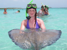Stingray in Antigua, Caribbean